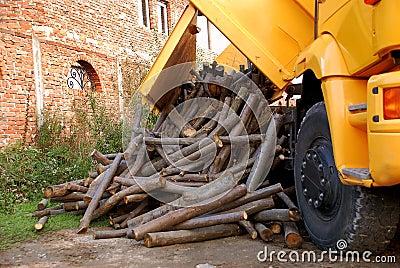 Descarregando a madeira
