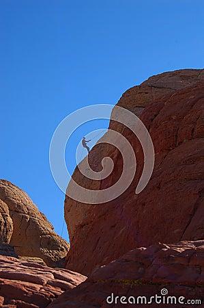 Descending rock climber