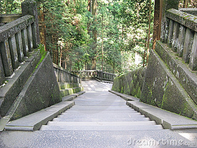 Descending stone stairs in an ancient forest