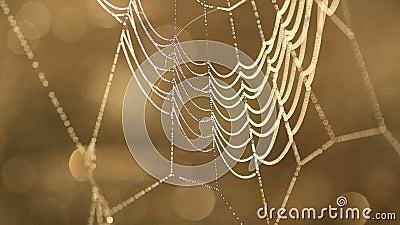Descensos del agua en Web de araña