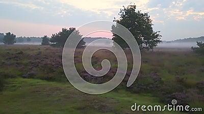 Descripción púrpura del brezo almacen de video