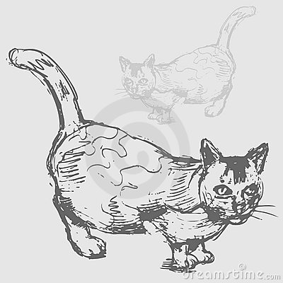 Desenho gordo do gato