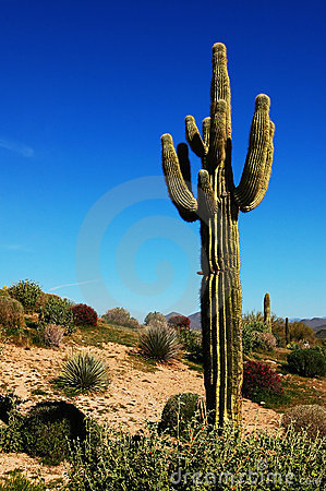 Free Desert Cactus Stock Photo - 4533290