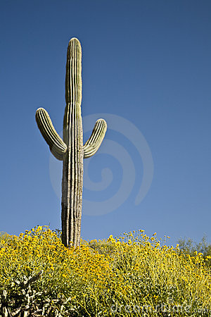 Free Desert Cactus, Flowers And Sky Royalty Free Stock Photo - 5389955