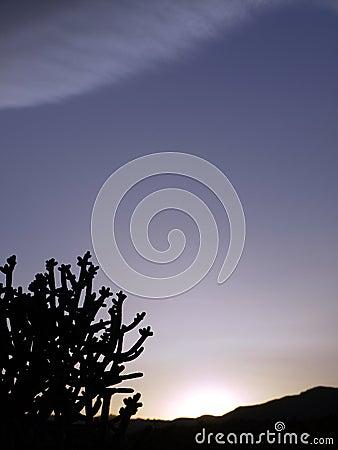 Desert: cactus silhouette at sunset