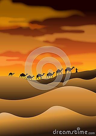 Desert camel caravans