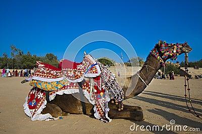 A desert camel