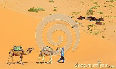 Desert Camp Editorial Stock Photo