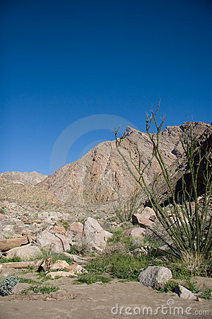 Desert Canyon and Mountains