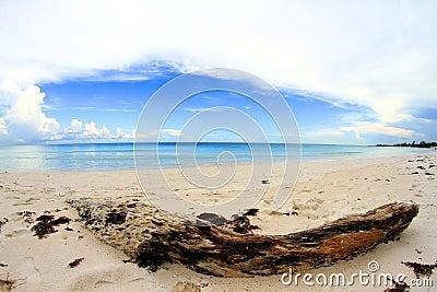 Desert caribbean beach