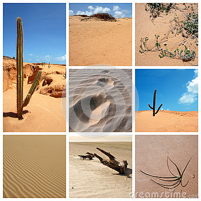 Desert collage