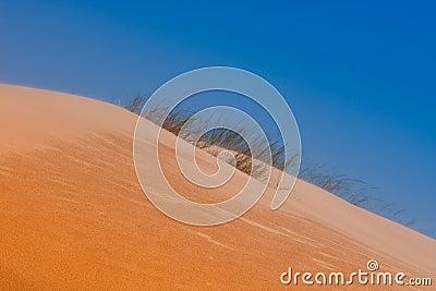 Desert dune grass