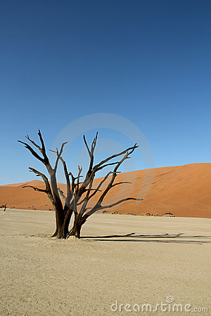 Desert dunes and dead tree