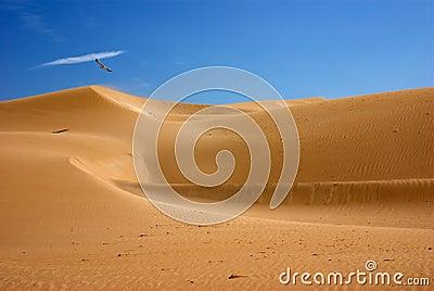 Desert dunes Morocco