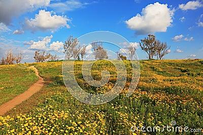 Desert in flowering
