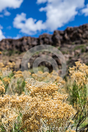 Free Desert Flowers Growing Near The Cliffs Royalty Free Stock Photos - 55271868