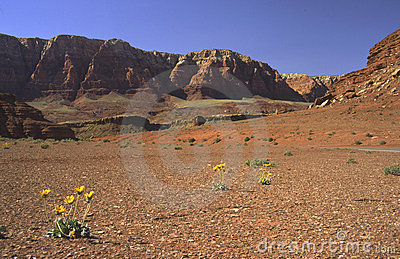 Desert flowers in Northern Arizona