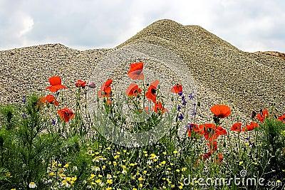 Desert and flowers 7
