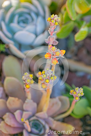 Free Desert Garden With Succulents Royalty Free Stock Photography - 58837987