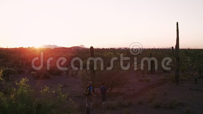 Desert Hikers at Sunset with Lens Flares. Desert Hikers Surrounded by Saguaros at Sunset with Lens Flares stock video