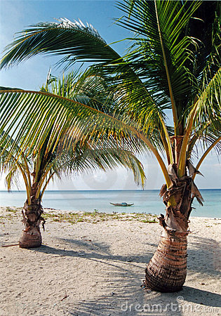 desert island beach palm trees philippines