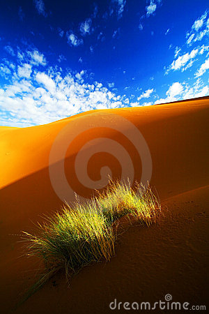 Free Desert Landscape Royalty Free Stock Photo - 7753295