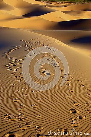 Free Desert Landscape Of Gobi Desert With Footprint In The Sand, Mongolia Royalty Free Stock Photo - 36789465