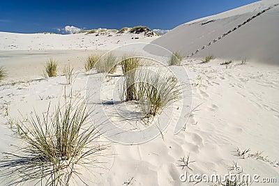The desert Leba