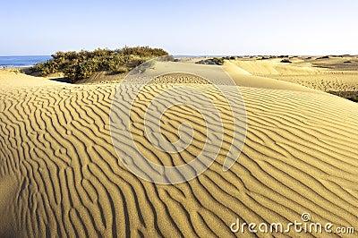 Desert Maspalomas Gran Canaria