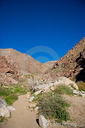 Desert Mountain in Palm Canyon