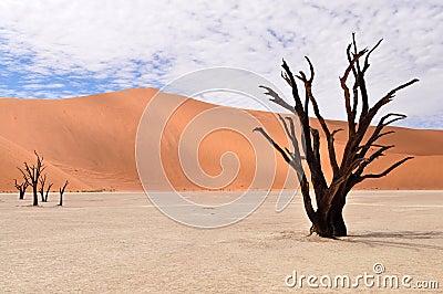 Desert Namib,Namibia,Sossusvlei pan