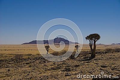 Desert Namibia