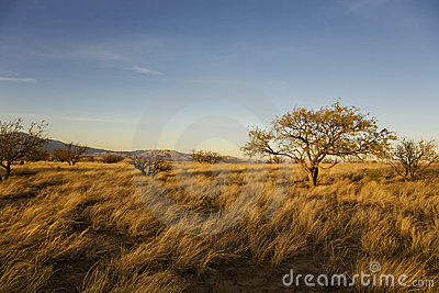 Desert Plain