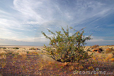 Desert plant and sky, Namibia