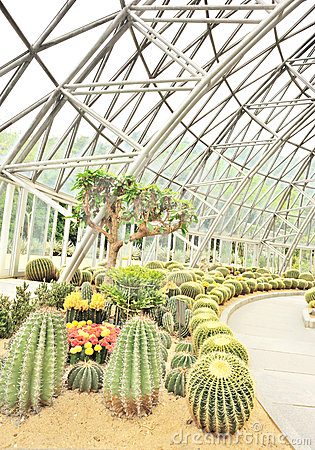 Desert plants greenhouse