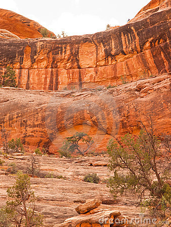 Desert red sandstone cliff with tree and arch