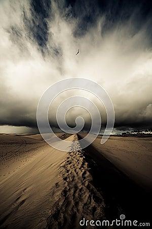 Free Desert Storm Royalty Free Stock Photo - 12801455