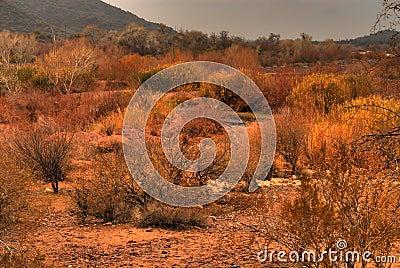 Desert Storm Approaching 9