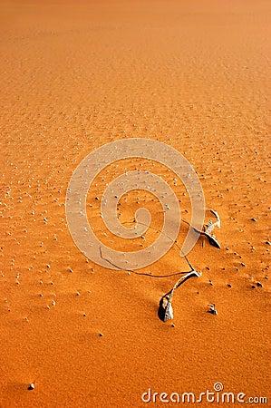 Desert structure