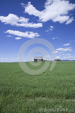 Deserted cabin and green field