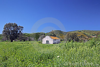 Deserted farmhouse in colourful field in Spain