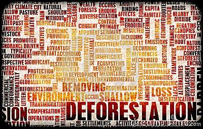 Desflorestamento