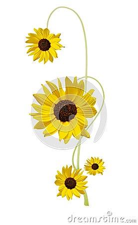 Designed sunflower