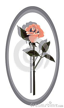 Designer Coral Rose