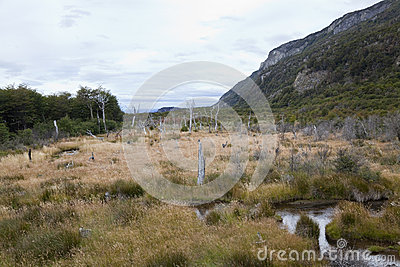 Desolated landscape at tierra del fuego