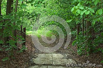 Desserrez la route en bois