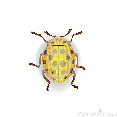 Dessin color de coccinelle jaune illustration stock - Dessin colore ...