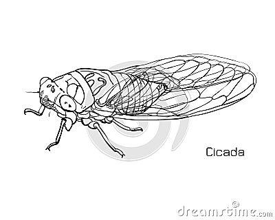 Dessin de cigale illustration de vecteur image 45263576 - Dessin de cigale ...
