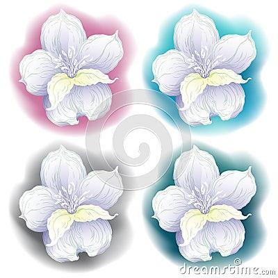 Dessin graphique de fleur d 39 orchid e illustration de vecteur image 49795662 - Dessin d orchidee ...