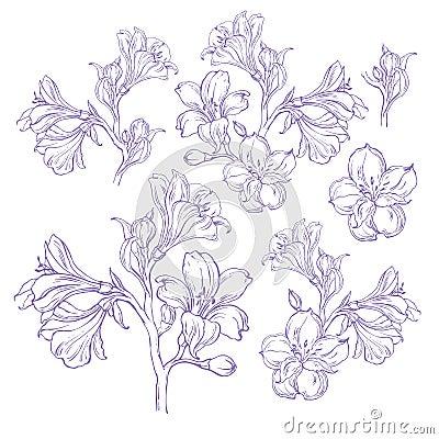 Dessin graphique de fleur d 39 orchid e illustration de vecteur image 40573556 - Dessin d orchidee ...